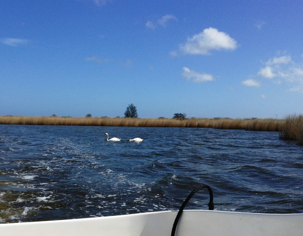 28. Swans on the broads