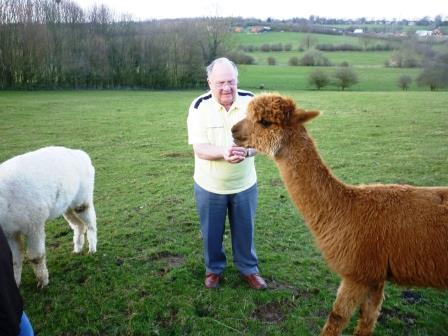 29. Ray gets ready to feed the brown alpaca