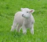 2014 Lambing Rally